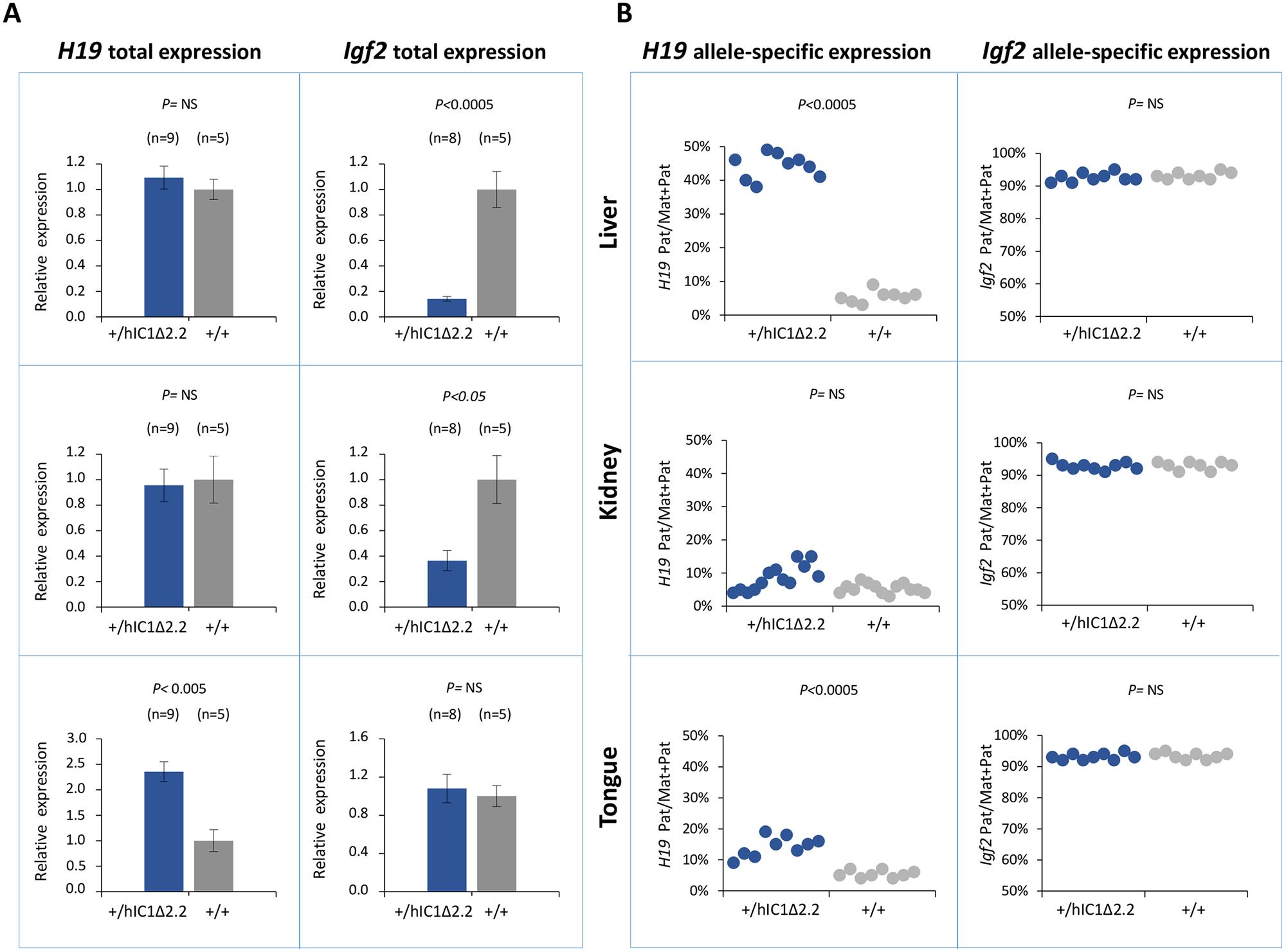 Analysis of <i>H19</i> and <i>Igf2</i> expression in <i>H19</i><sup><i>+/hIC1</i>Δ<i>2</i>.<i>2</i></sup> newborn mice.