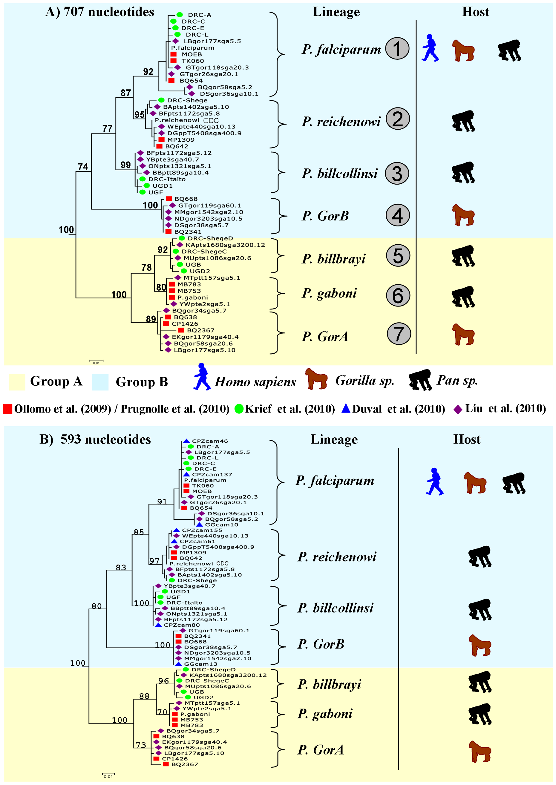 Phylogeny of the <i>Laverania</i> subgenus.