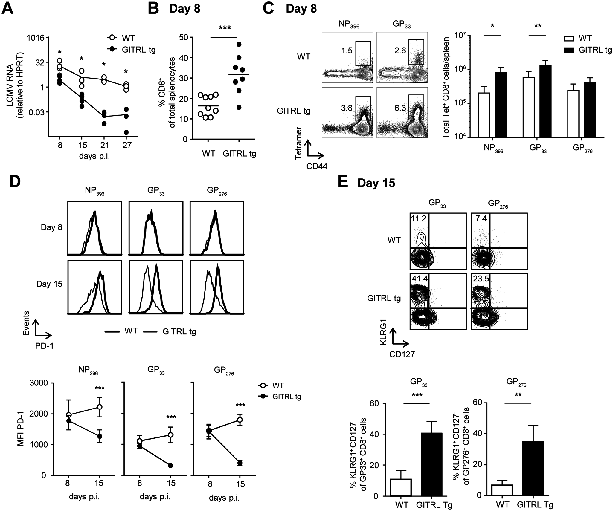 Protective anti-viral CD8 response in GITRL tg mice is established very early during infection.