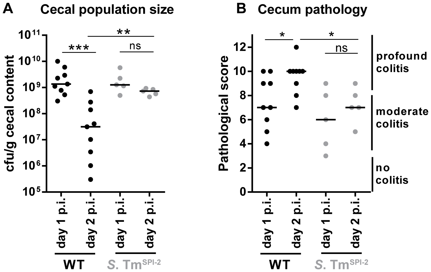 Decrease in cecal population size between day 1 and day 2 p.i. only occurs during <i>S.</i> Tm<sup>WT</sup> induced inflammation, but not during inflammation in a SPI-2 deficient background.