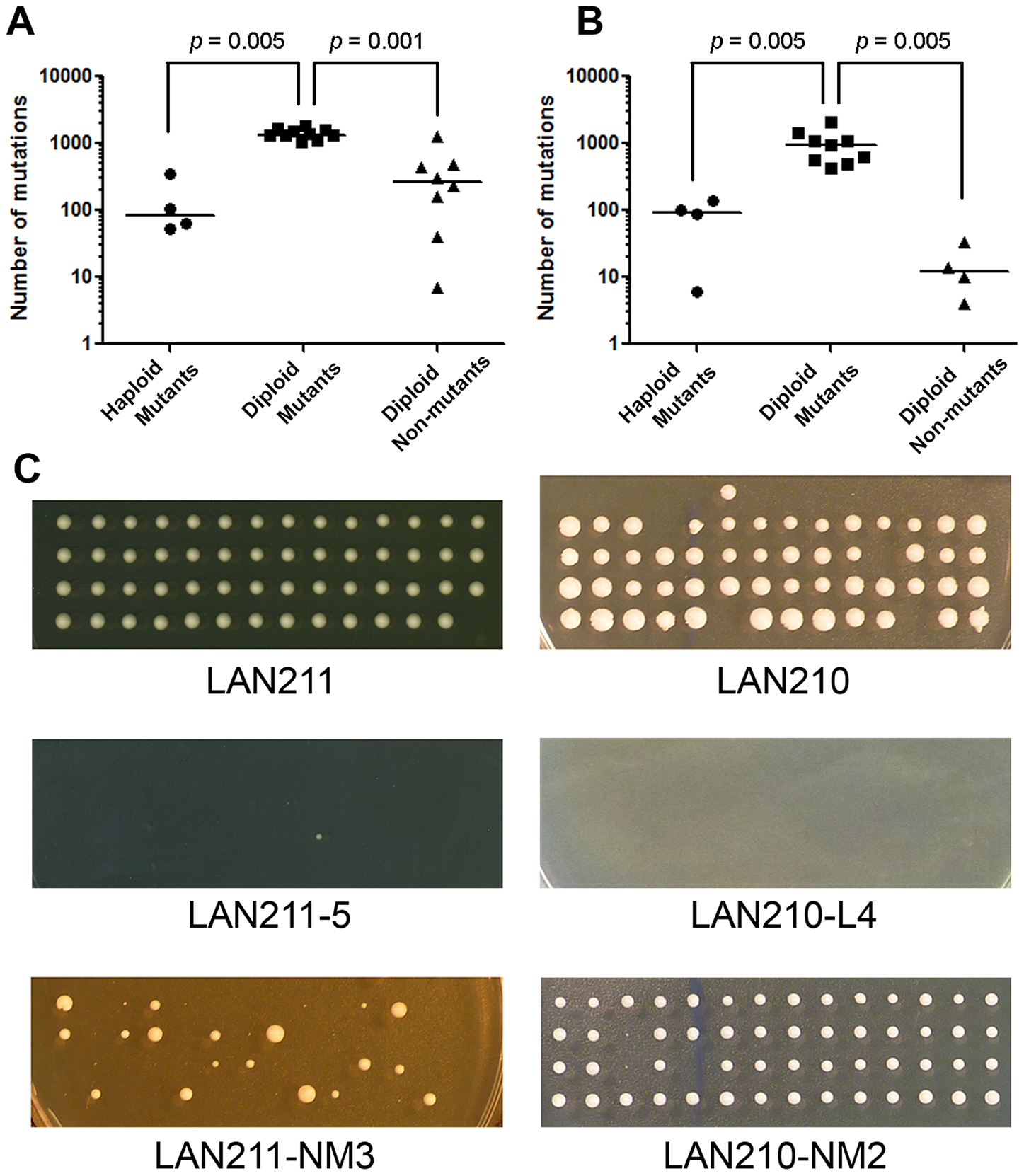 Dependence of mutational load on ploidy and mutant selection.