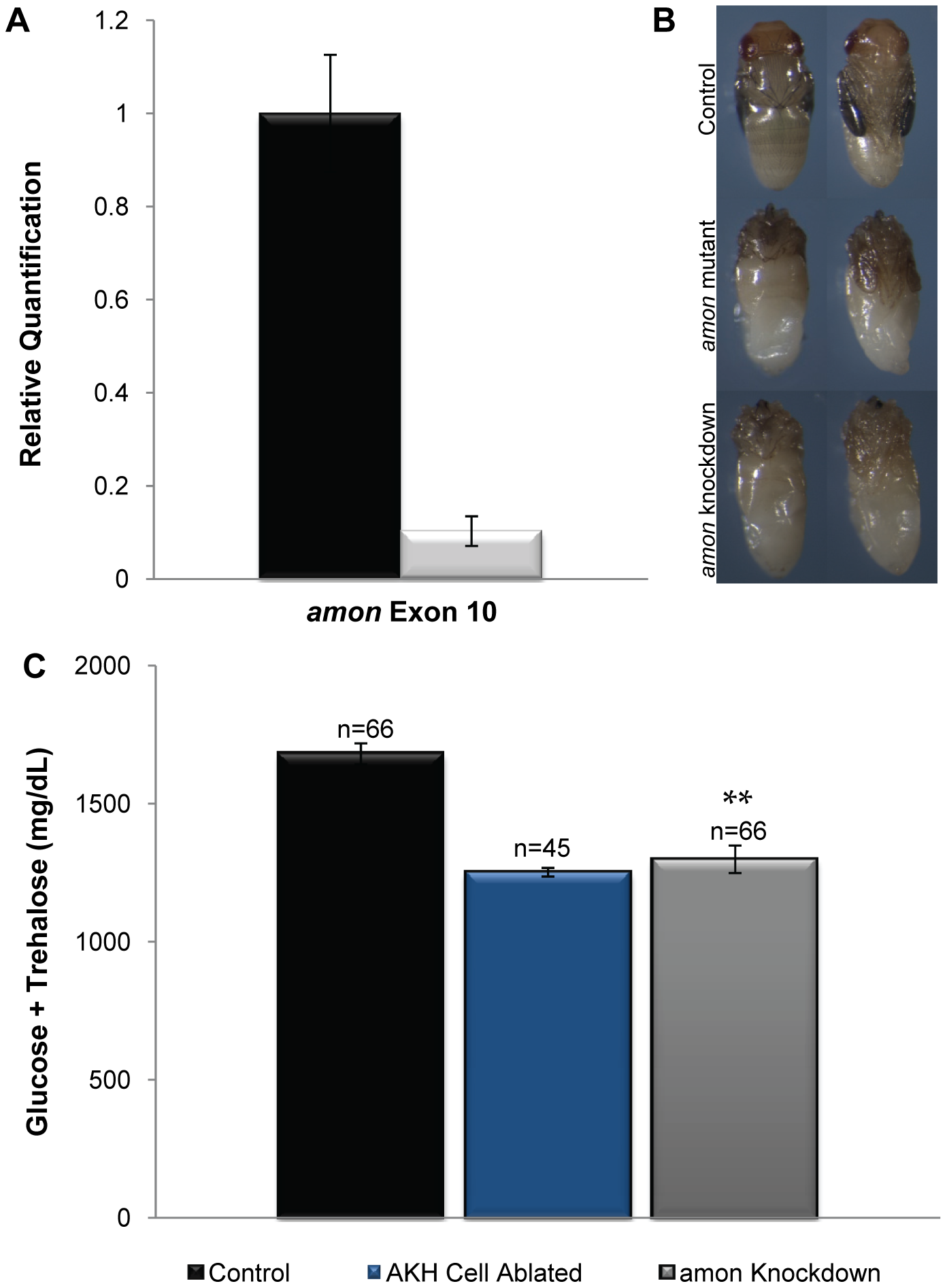 <i>amon</i> is required in the AKH producing cells for normal sugar regulation.