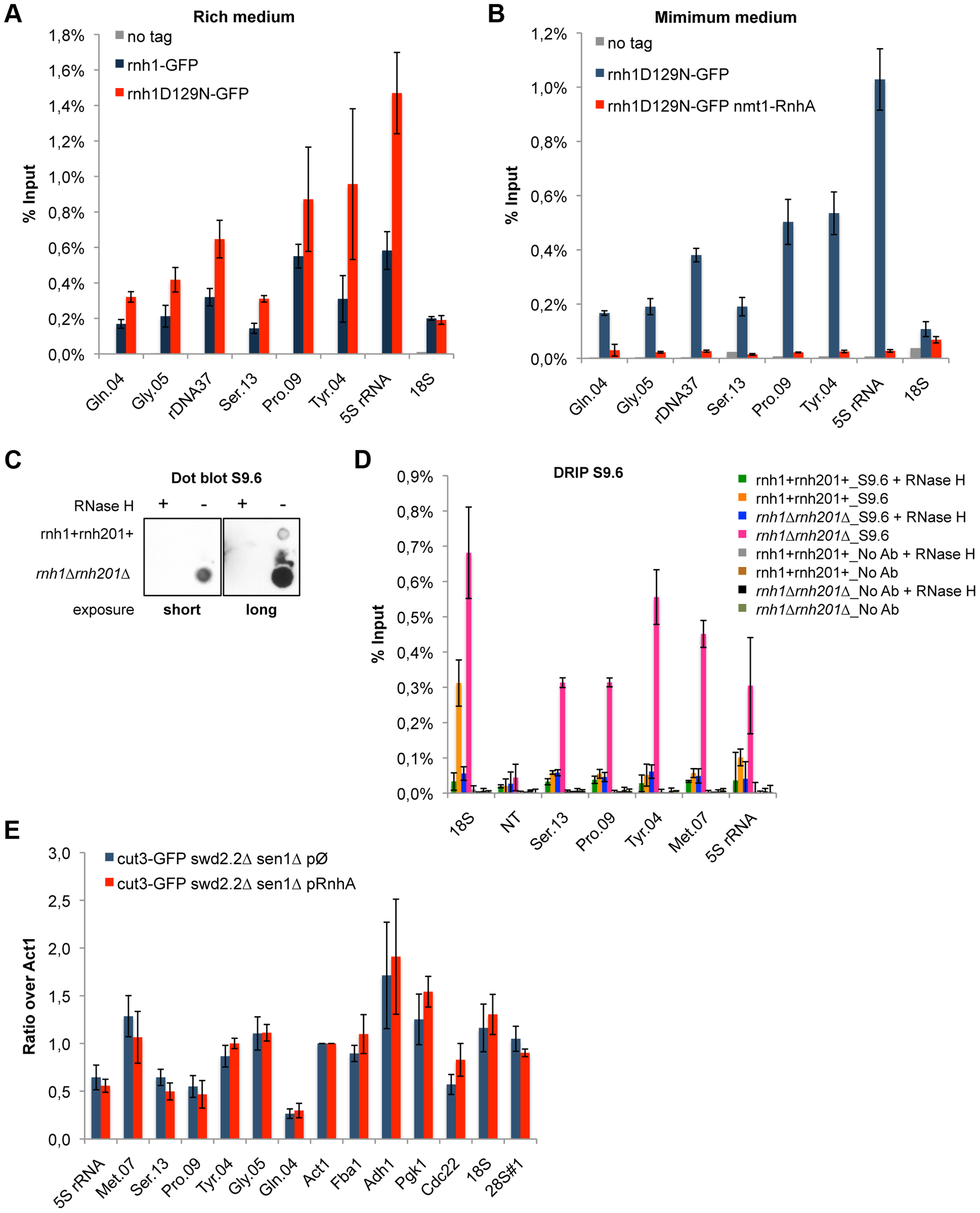 R-Loops form in abundance at Pol III-transcribed genes but they do not significantly impact the association of condensin.
