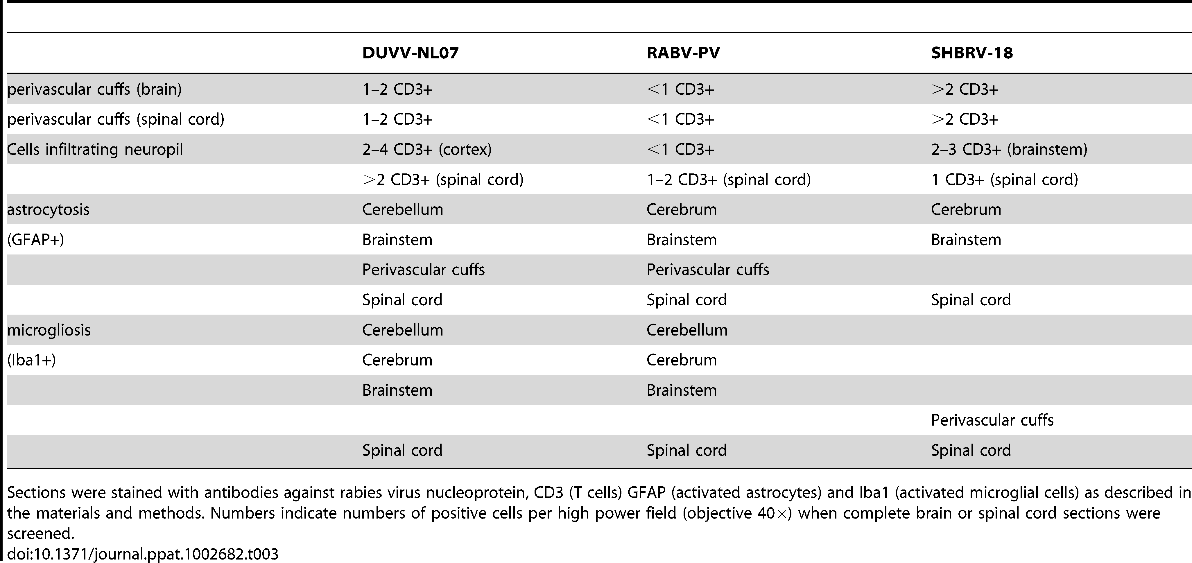 Overview of histopathological changes observed in the brain and spinal cord of animals infected with DUVV-NL07, RABV-PV or SHBRV-18 virus at the time of paralysis.