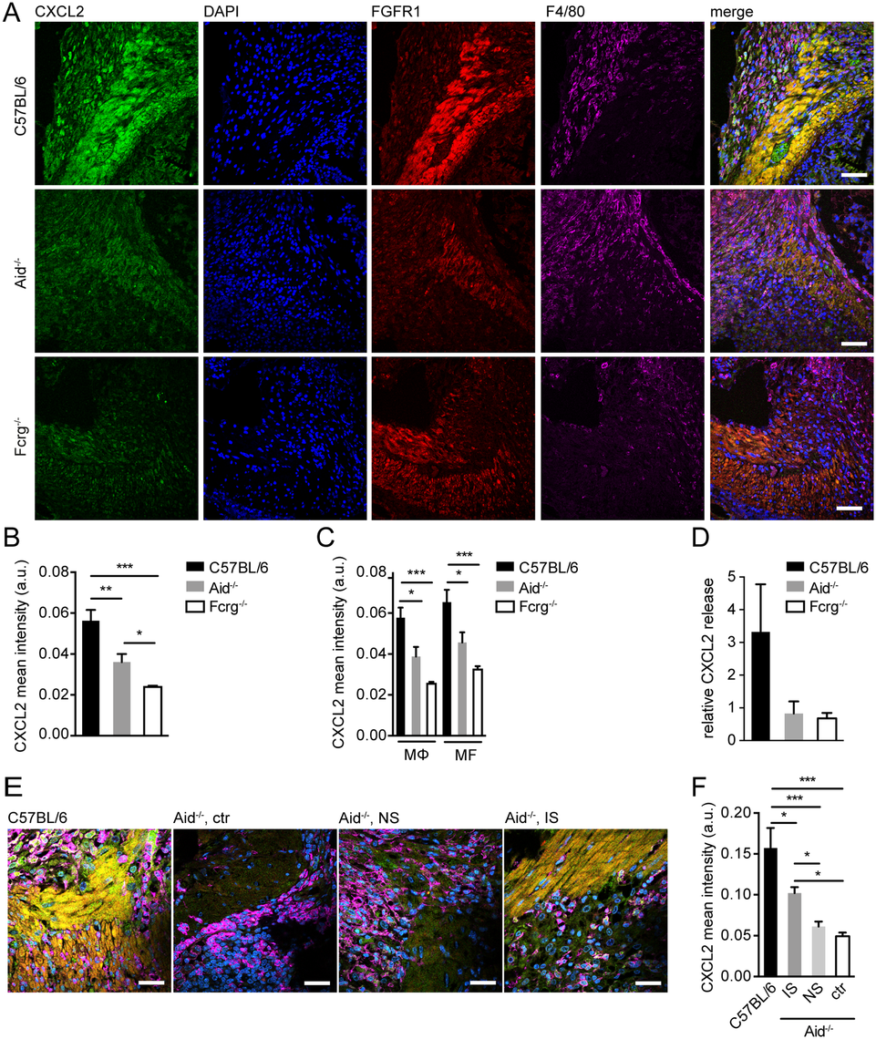 Antibody and Fcrg-dependent mechanisms trigger CXCL2 expression during helminth infection in vivo.