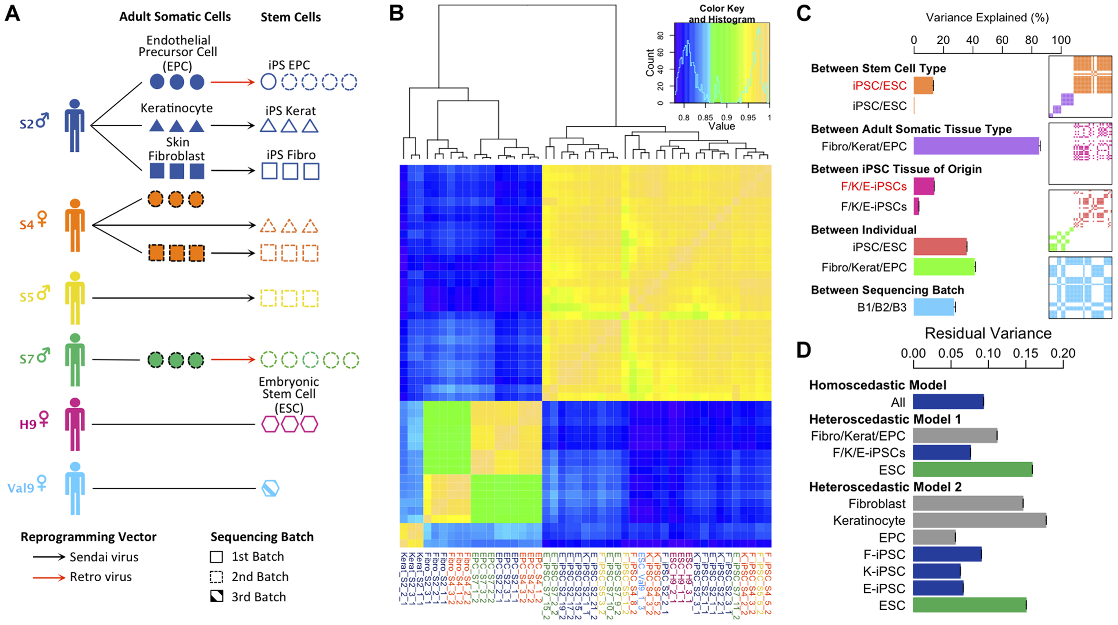 Experimental design and variance components analysis of transcription in iPSCs, somatic progenitors, H9 and Val9 embryonic stem cells.