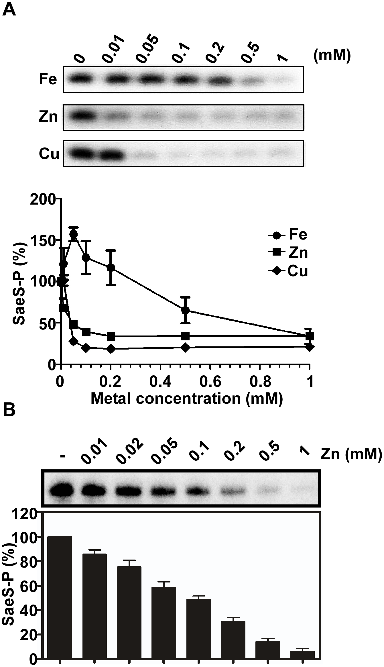 Cu and Zn inhibit the autokinase activity of SaeS.