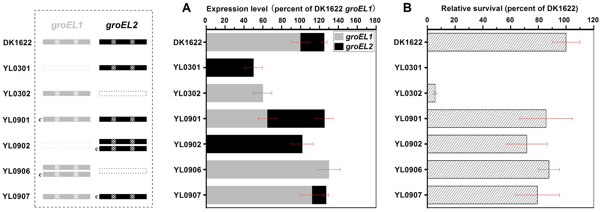 Quantitative PCR analysis of the <i>groEL1</i> and <i>groEL2</i> expression levels and survival rates after heat shock at 42°C for 30 min.