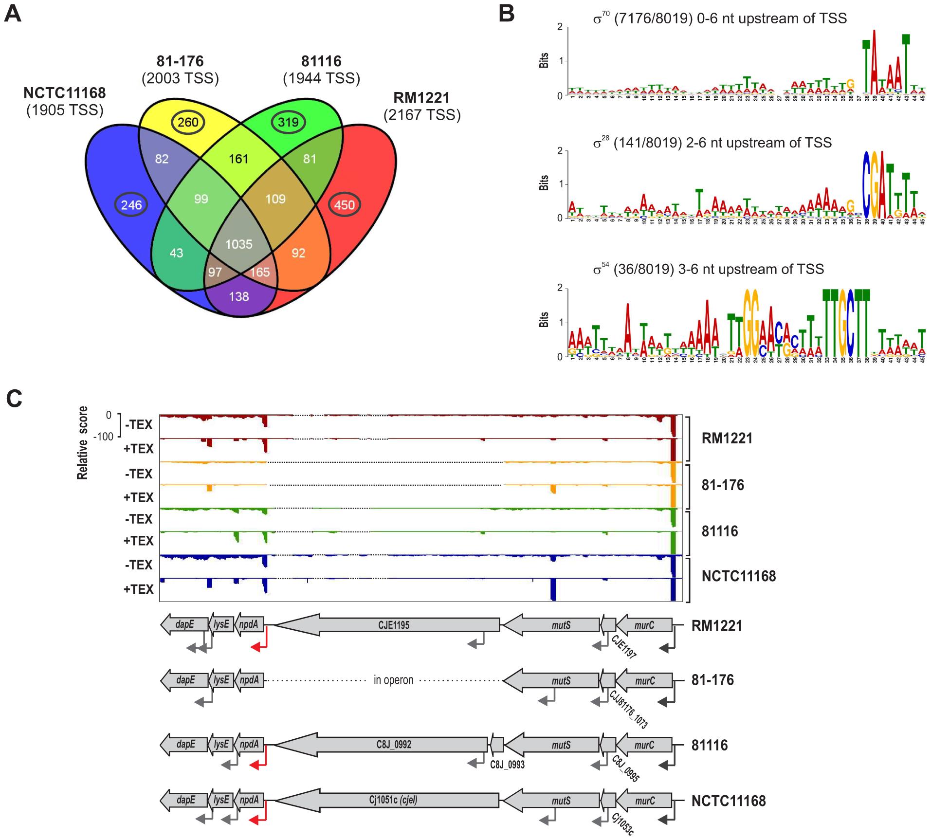 Transcriptome features of multiple <i>C. jejuni</i> strains.