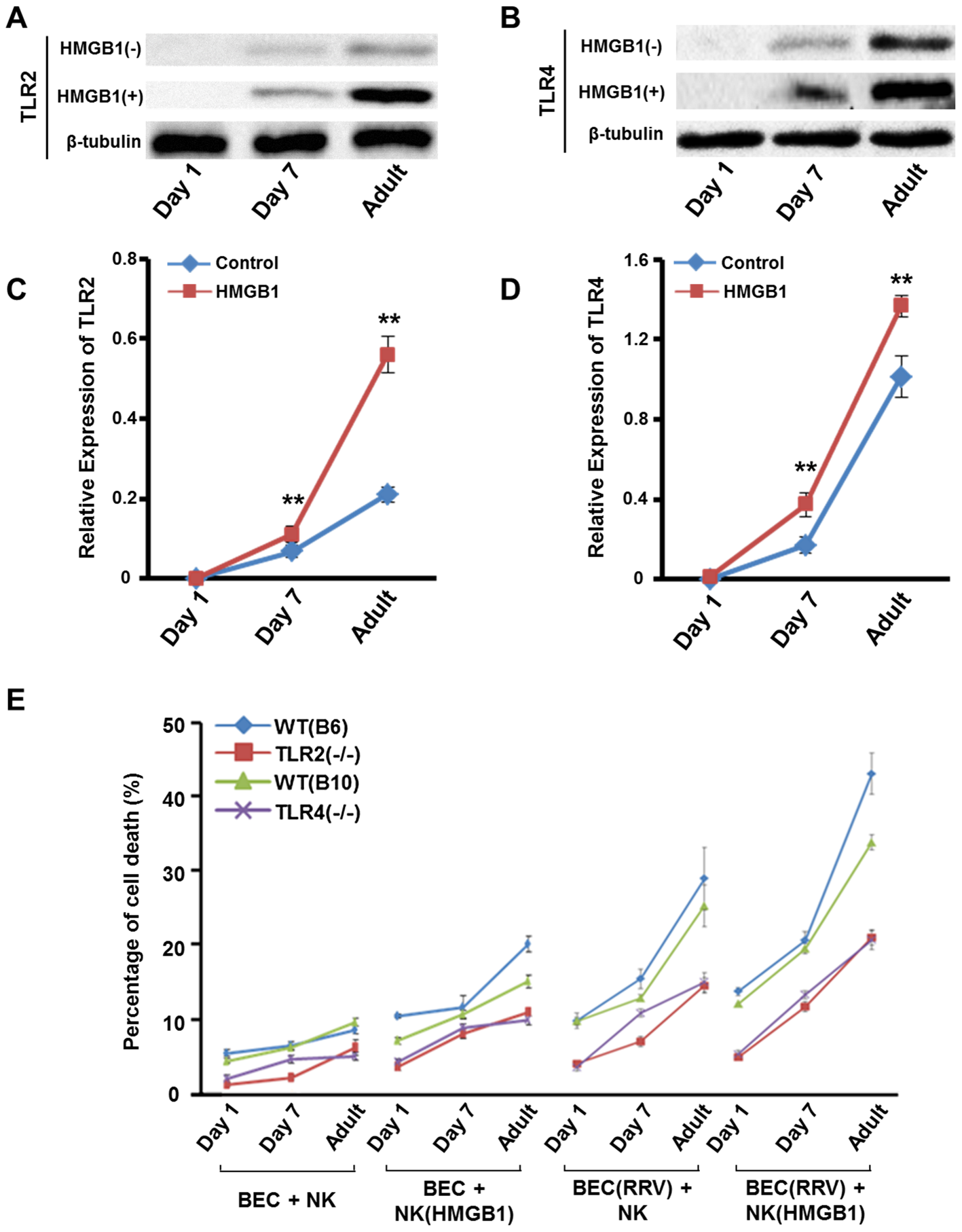 Expression of TLR2/TLR4 and NK cell cytotoxicity increases as mice age.