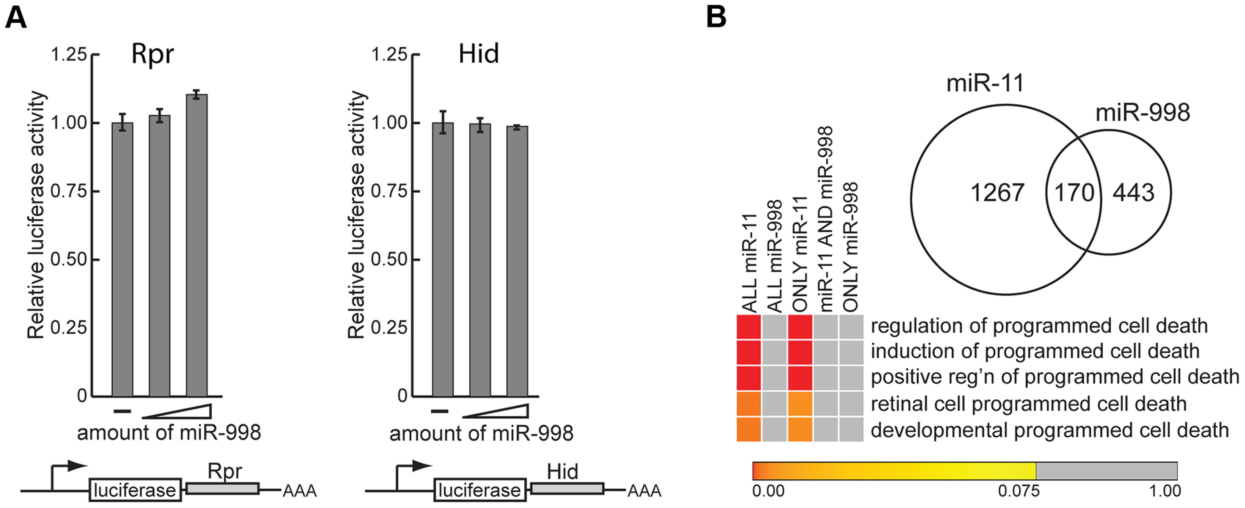 miR-11 and miR-998 limit dE2F-dependent cell death through different targets.