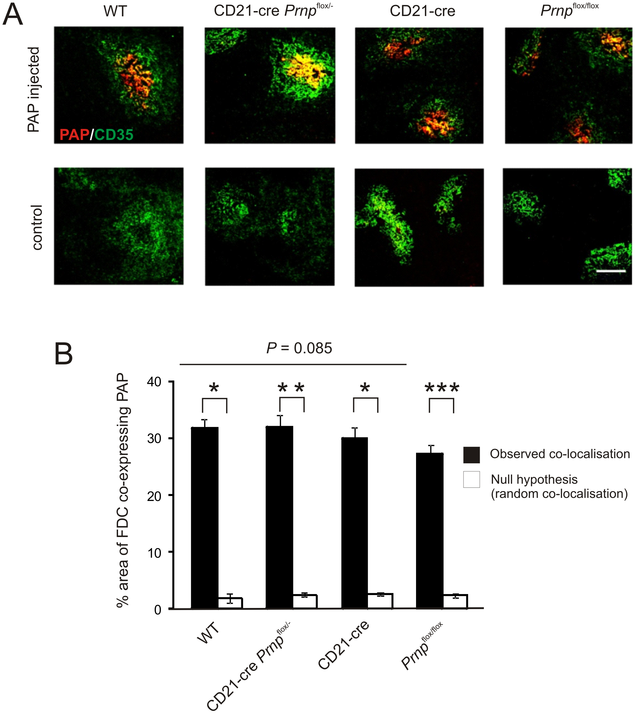 Effect of FDC-restricted PrP<sup>C</sup>-ablation on immune complex trapping.
