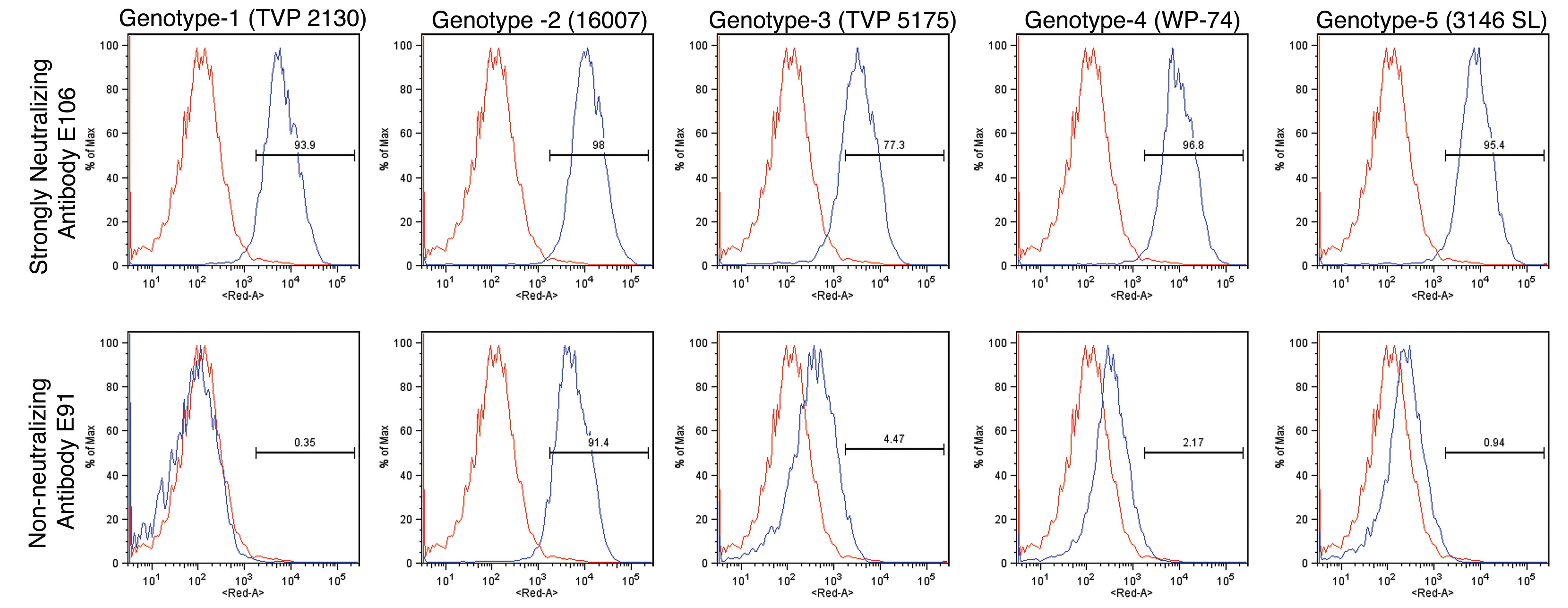 Binding of MAbs to cells infected with different genotypes of DENV-1.