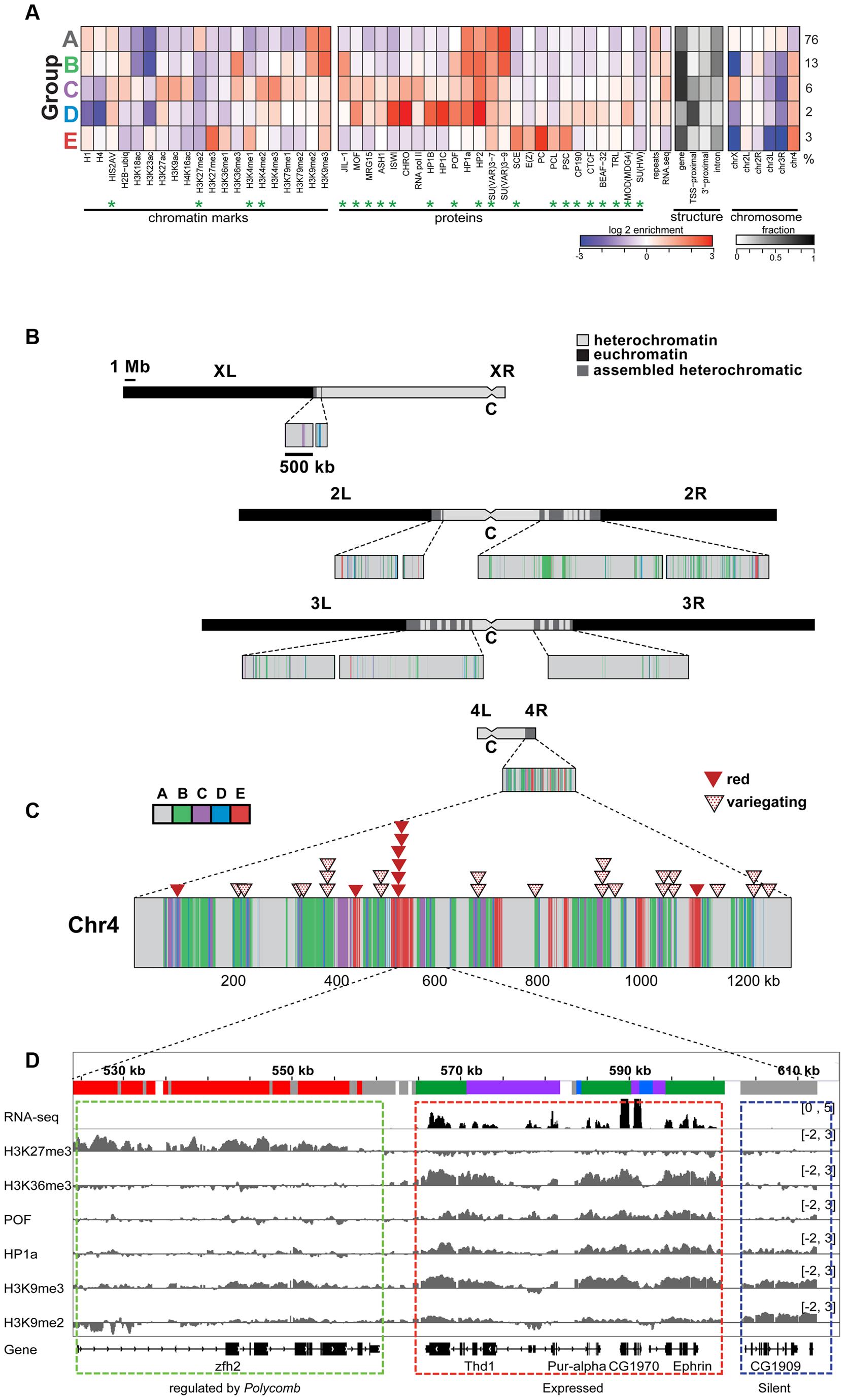 The chromatin composition of <i>D. melanogaster</i> chromosome 4 shows distinct patterns of enrichment.