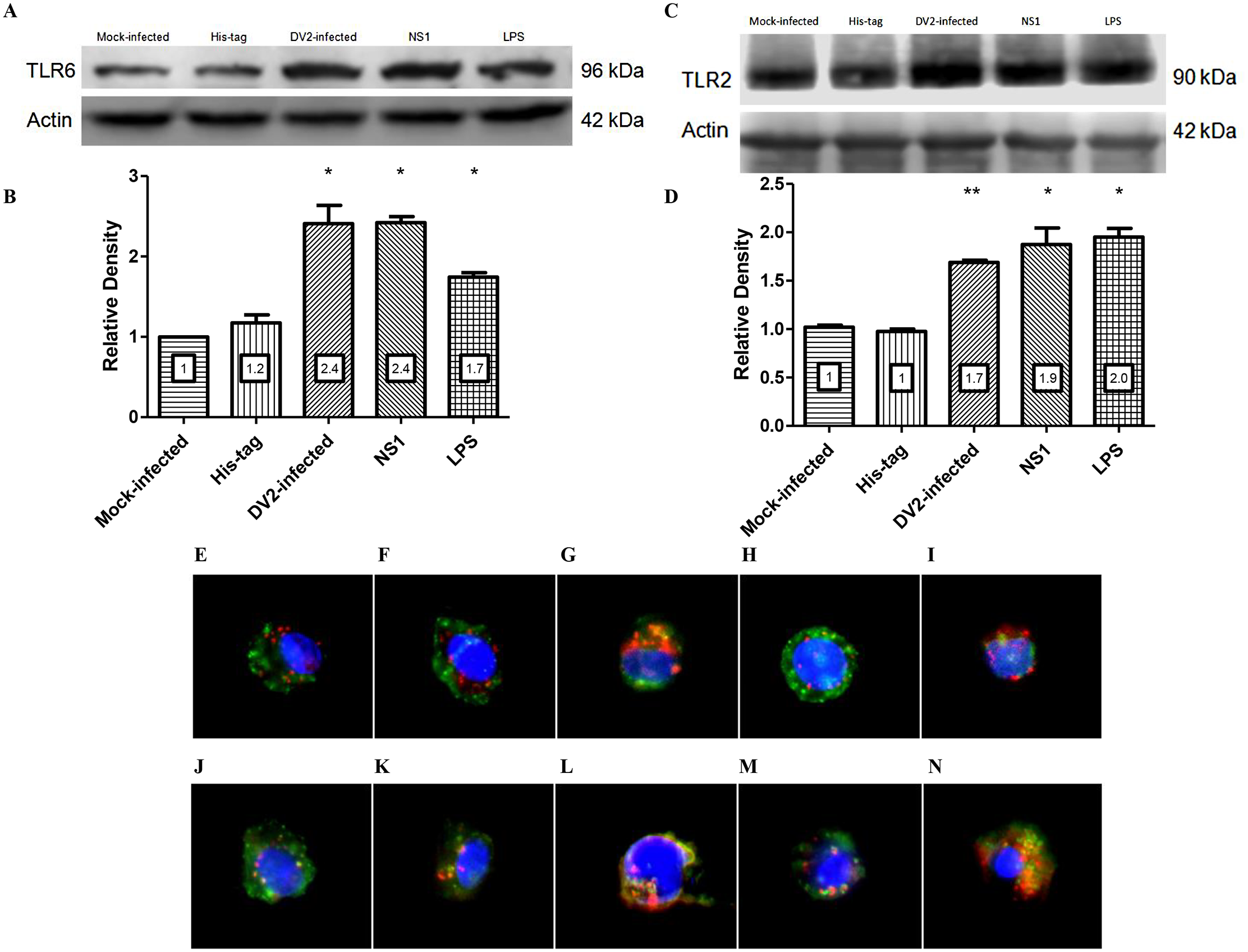 DV NS1 protein up-regulates TLR2 and TLR6 of PBMC.