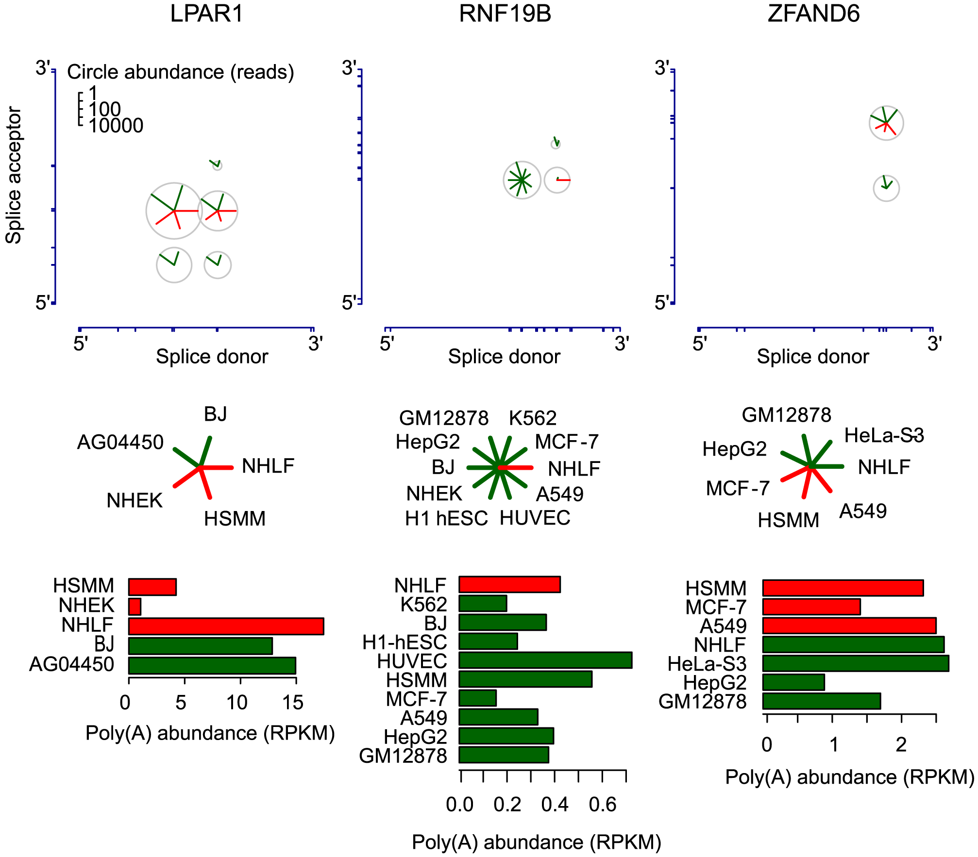 Circular isoform expression is regulated within individual genes.