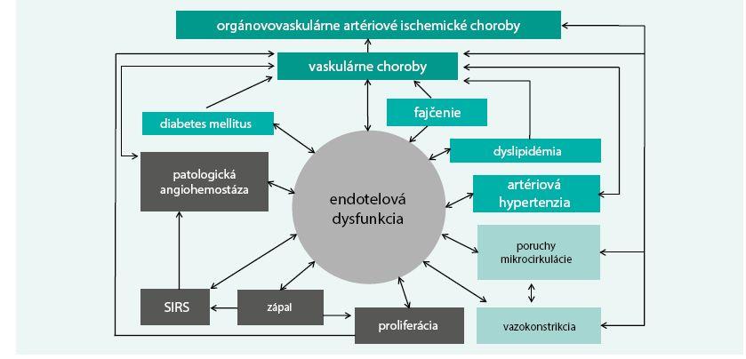 Schéma. Dysfunkcia endotelu a zložité vzájomné vzťahy s artériovou hypertenziou a inými vaskulárnymi rizikovými faktormi a patologickými mechanizmami v patogenéze cievnych artériových chorôb a orgánovovaskulárnych artériových ischemických chorôb [12]
