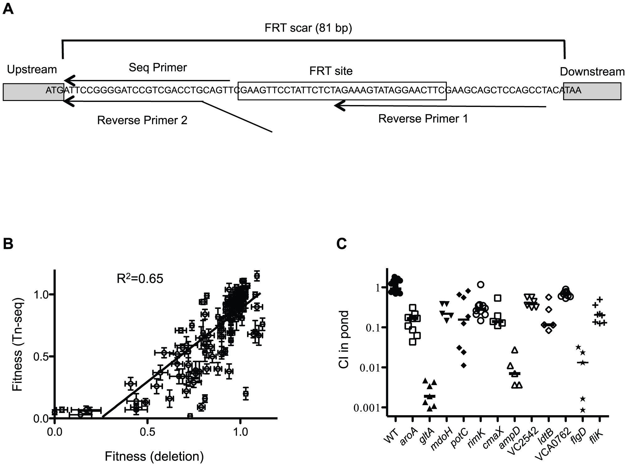 Validation of Tn-seq results by gene deletion.