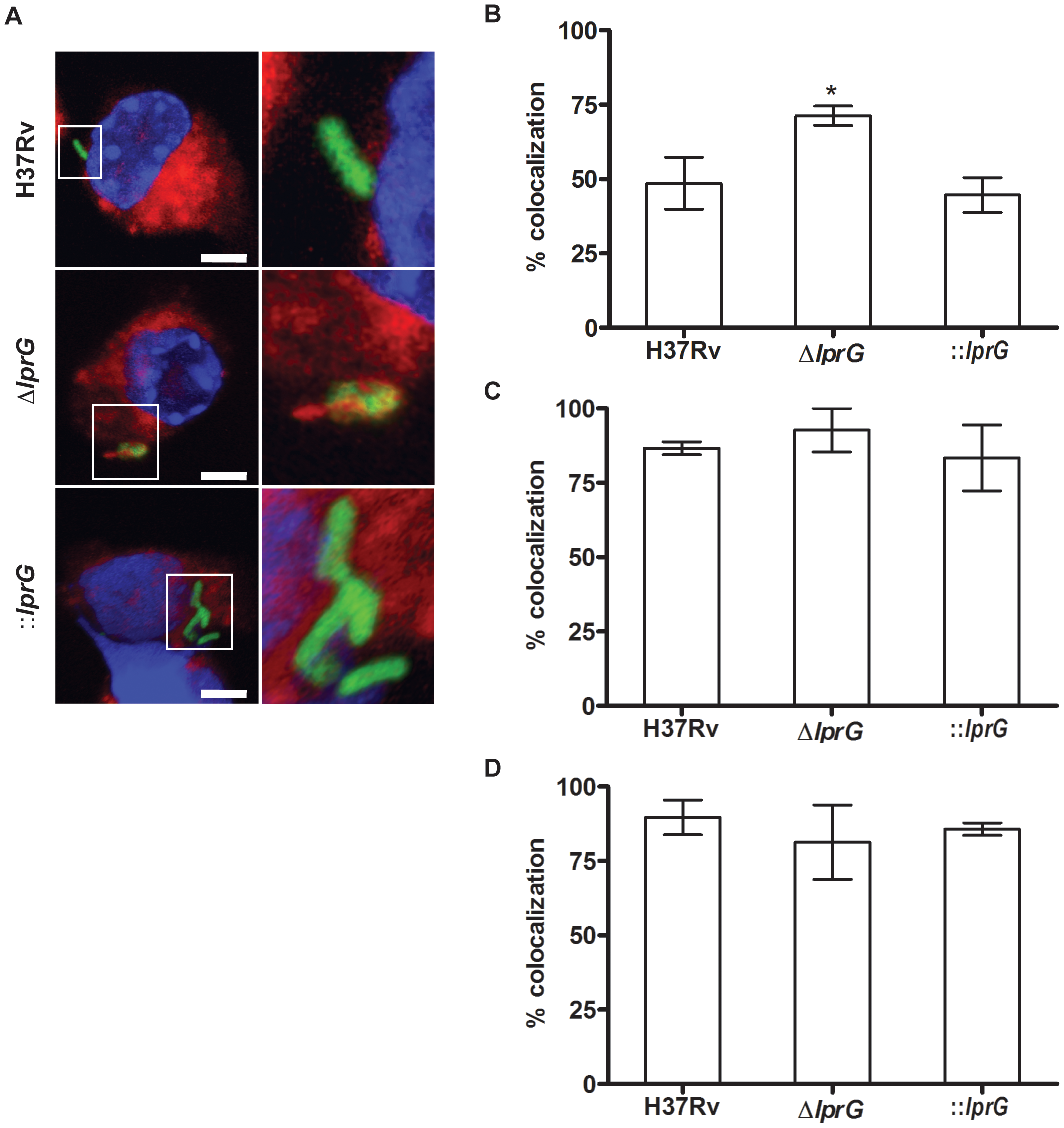 The <i>lprG</i> mutant is impaired for inhibition of Phagosome-Lysosome fusion.