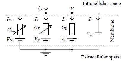 Fig. 1: Circuit scheme of the Hodgkin-Huxley model.