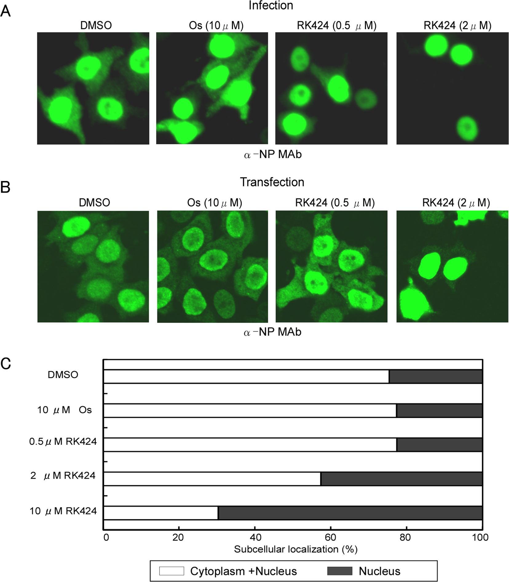 Effect of RK424 on cytoplasmic localization of NP.