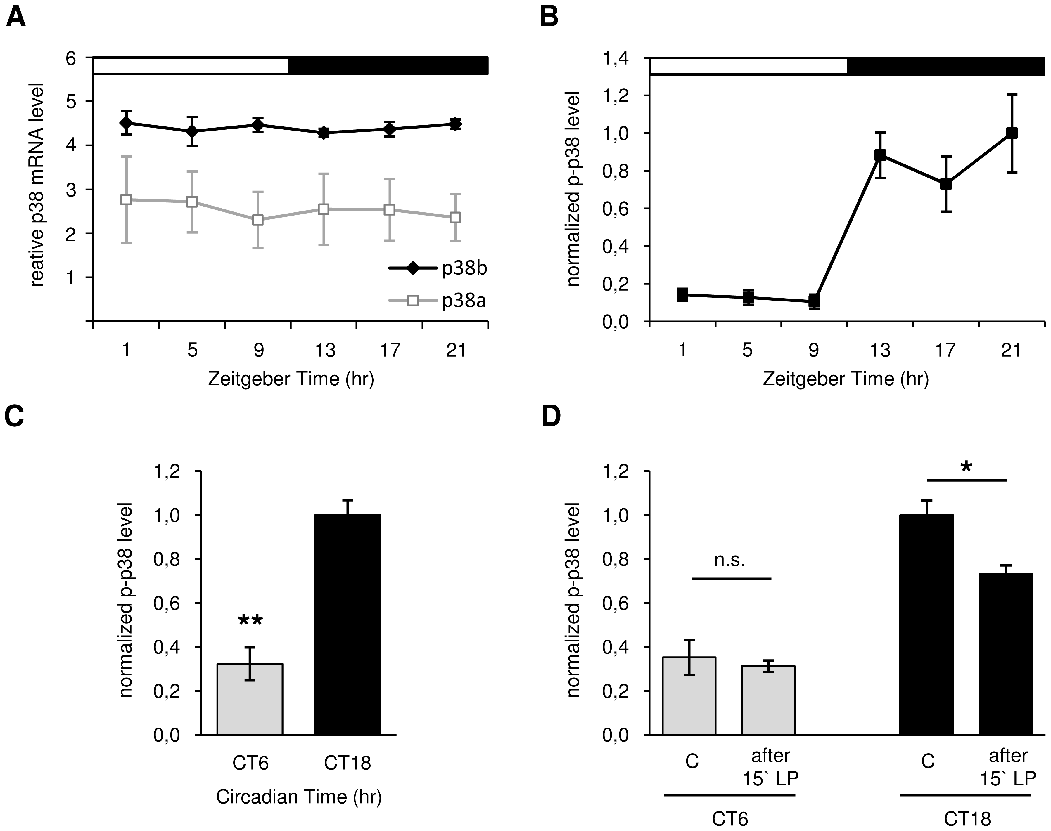 Daily p38 mRNA (A) and protein expression (B–D) in <i>Canton S</i> wildtype.