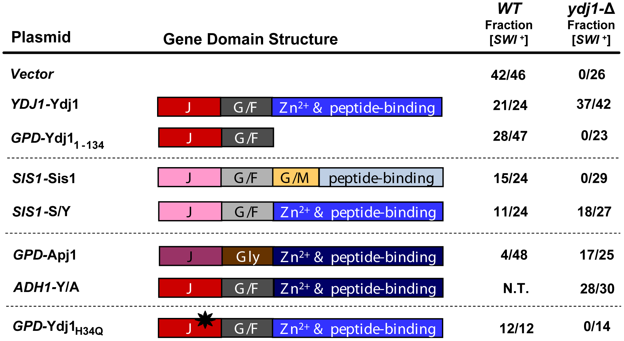 [<i>SWI</i><sup>+</sup>] requires a function of the C-terminal domains of Ydj1.