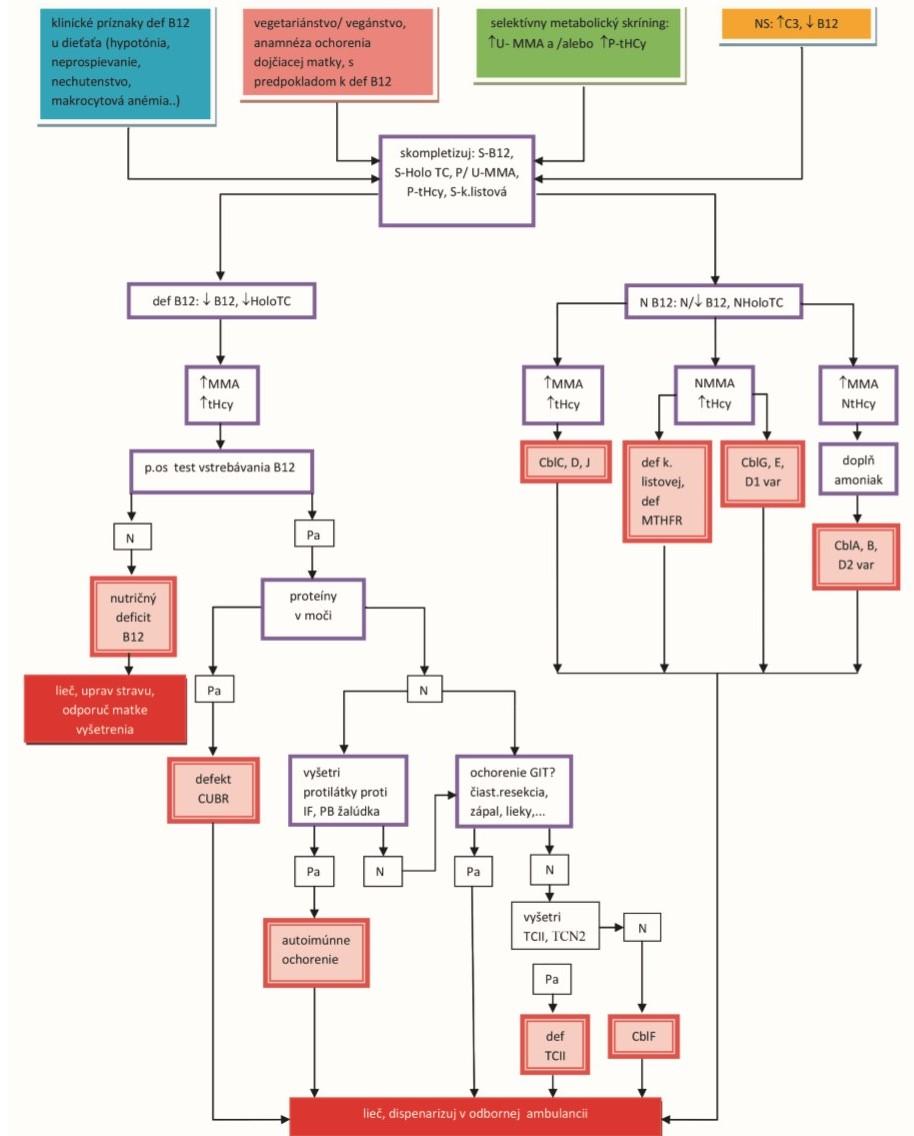 Schema 1. Diferenciálna diagnostika porúch metabolizmu vitamínu B<sub>12</sub>.