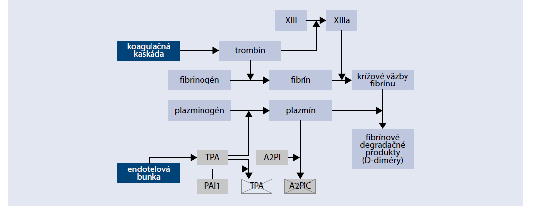 Schéma 3 | Hyperkoagulačný stav pri DM. Upravené podľa [6]