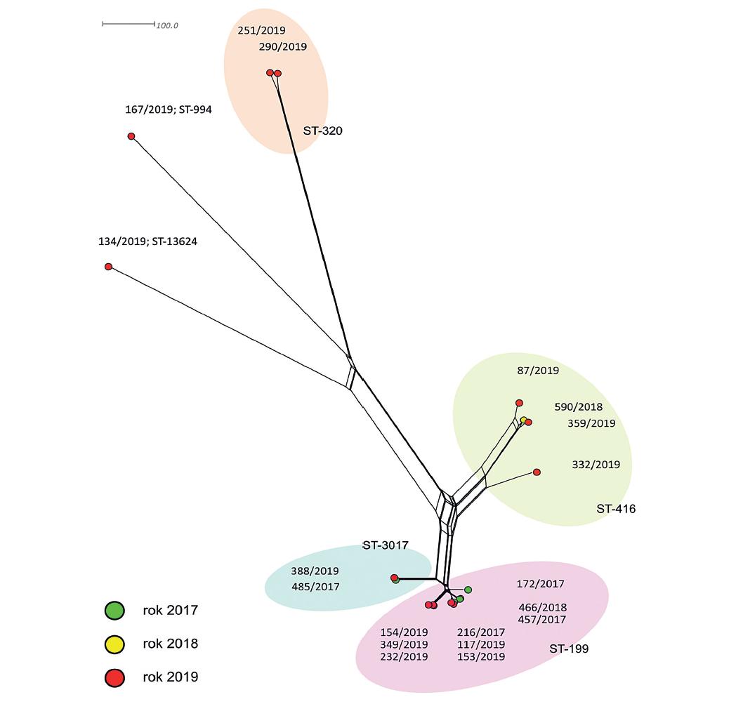 Vizualizace genetické diverzity sérotypu 19A u 19 izolátů z České republiky<br> Figure 1. Visualization of genetic diversity of serotype 19A in 19 isolates from the Czech Republic