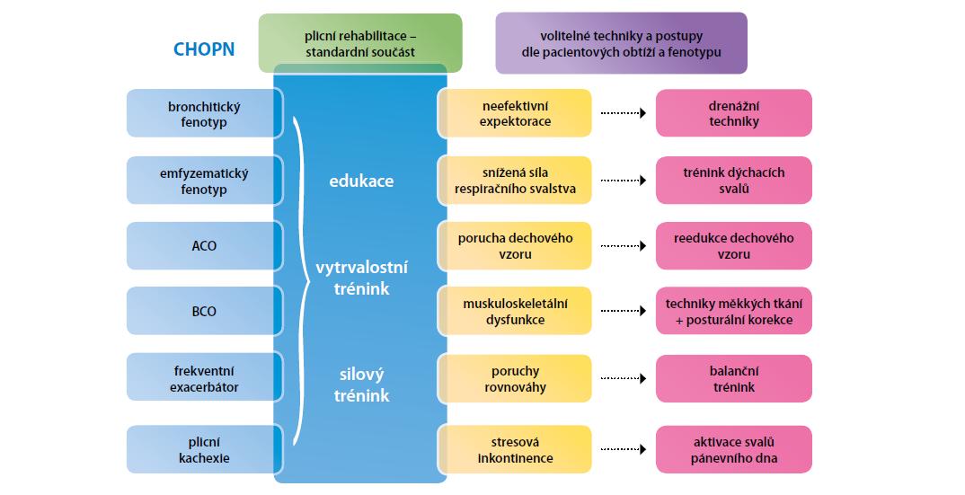 Základní a fenotypově-specifické techniky fyzioterapie používané v léčbě CHOPN