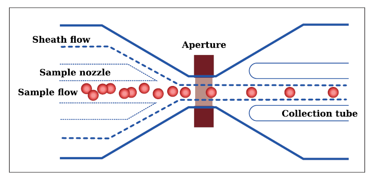 Průchod buněk měřicí aperturou (zdroj: Sysmex).