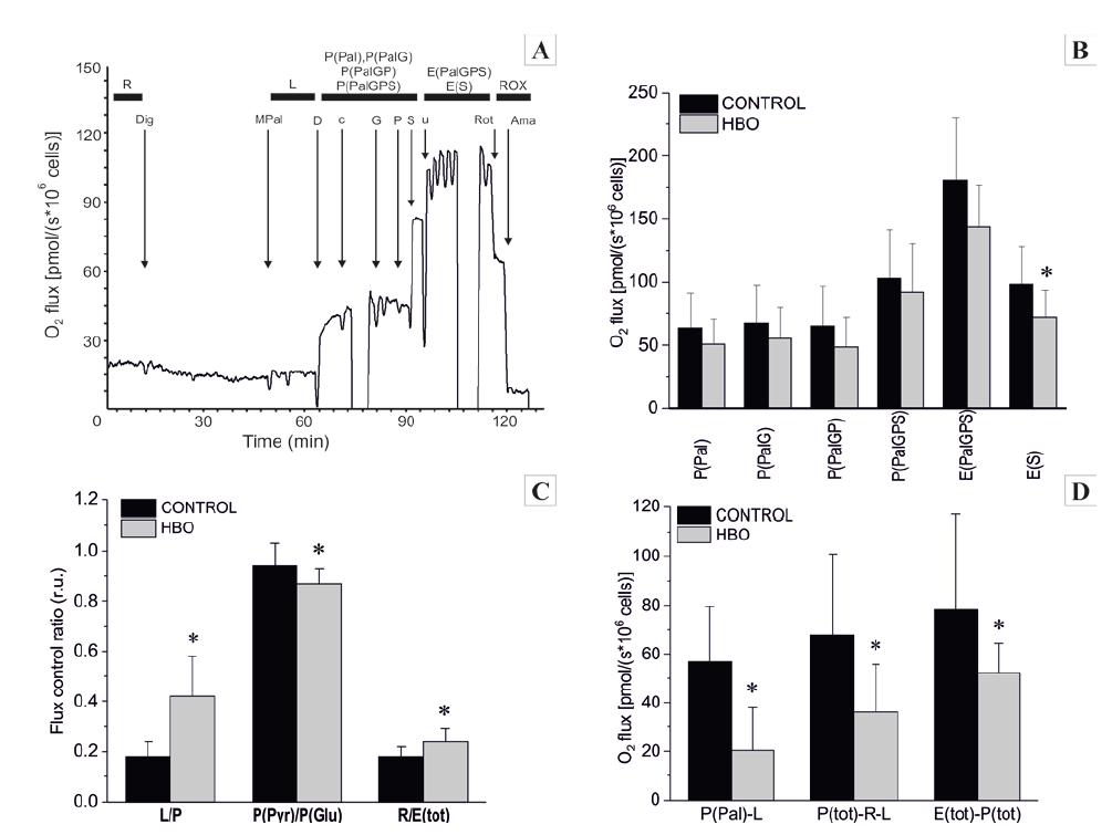 A-D. Mitochondriální respirace A – Příklad titračního protokolu substrátů-rozpřahovačů pro kontrolní HFL1 buňky se substráty pro elektron-transferující flavoprotein (ETF), Komplex I a Komplex II. Černá křivka = spotřeba kyslíku vyjádřená na 106 kontrolních buněk<br> Substráty: Dig = digitonin, M = malát, Pal = palmitoylcarnitin, D = ADP, c = cytochrom c, G = glutamát, P = pyruvát, S = sukcinát, u = FCCP, Rot = rotenon, AmA = antimycin A.<br> B – základní respirační stavy<br> C – poměry respiračních stavů<br> D – rozdíly respiračních stavů (P-OXPHOS, L-LEAK, E-ETS)
