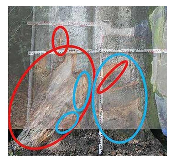 Srovnání deformací zanechaných na stromě po obou nehodách.<br> Fig. 10. Comparison of deformations left on a tree after both collisions.