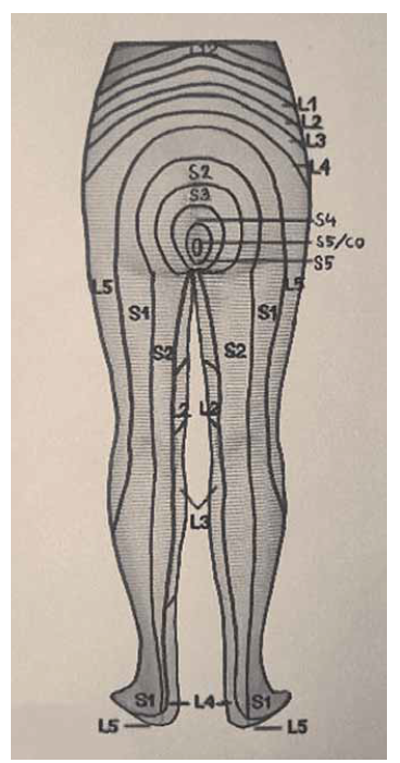 Dermatomy dolních končetin, pohled zezadu.<br> Fig. 2. Dermatomes of the lower limbs, rear view.