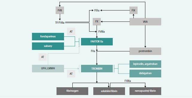 Schéma. Ovlivnění koagulace