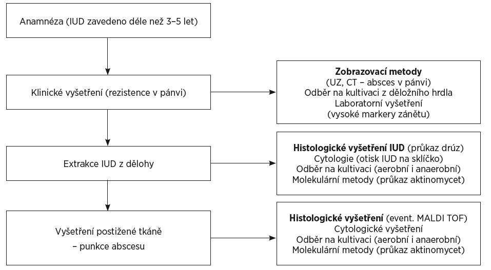 Schéma 1. Algoritmus nejspolehlivějšího stanovení diagnózy pánevní aktinomykózy u žen s IUD<br> Figure 1. The best algorithm for diagnosing pelvic actinomycosis in women using an IUD