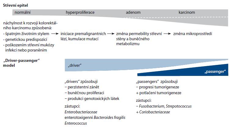 """Schéma 1. Bakteriální """"driver-passenger"""" model."""