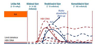 Typický průběh HBeAg-CHB po vysazení NA (6)