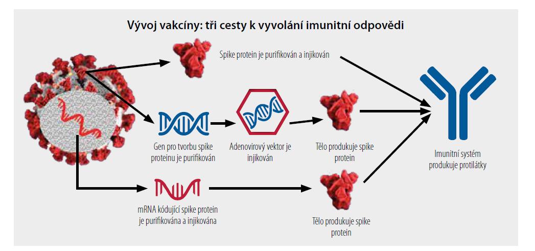 Grafické znázornění principu peptidové, vektorové a mRNA vakcíny. [Upraveno podle 11]