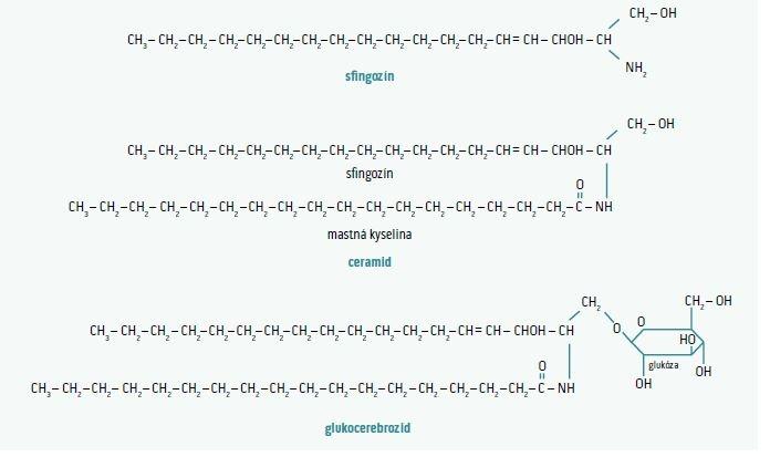 Schéma 1 | Štruktúra sfingolipidu: sfingozín spolu s mastnou kyselinou vytvára ceramid. Po naviazaní monosacharidu na ceramid vzniká glukocerebrozid. V prípade naviazania ceramidu s polysacharidom a s jedným alebo viacerými zvyškami kyseliny N-acetylneuroaminovej je výsledkom gangliozid. Upravené podľa [5]