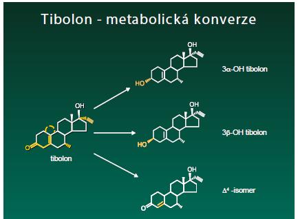 Metabolismus tibolonu