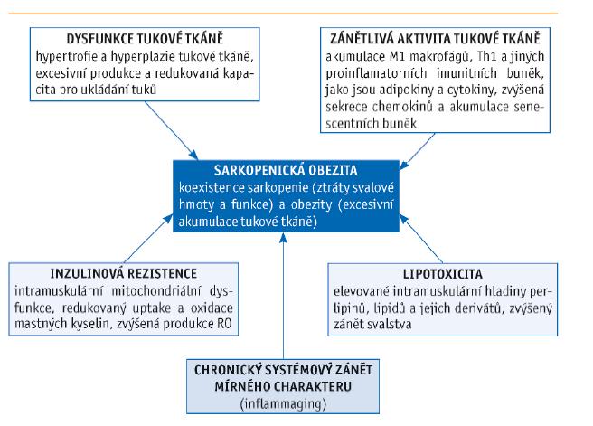 Faktory ovlivňující vznik sarkopenické obezity (dle Kalinkovich a Livshits, 2017)