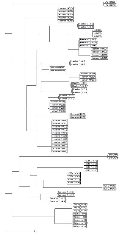 Dendrogram klastrovaných kmenů linie 2 Východo-Asijské a 4 Euro- -Americké na území ČR v roce 2014 Vysvětlivky: *kmen získaný od pacienta s TBC s cizí státní příslušností akmeny získané od matky a dcery bkmeny získané od dvou bratrů<br> Figure 1. Dendrogram of clustered East-Asian lineage 2 and Euro-American lineage 4 strains the Czech Republic in 2014 Note: *strain obtained from a non-resident TB patient astrains obtained from a mother and her daughter bstrains obtained from two brothers