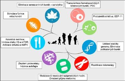 Slibné terapeutické intervence do procesu stárnutí ve vztahu k 9 charakteristickým rysům stárnutí (viz obr. 2) (upraveno dle: 9.)