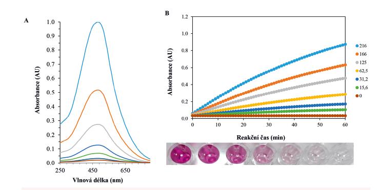 Typické VIS spektrum průběhu Trinderovy reakce v závislosti na koncentraci sarkosinu po 15 min reakce. Podmínky: 600 μl, SOX 1 U/ml, sarkosin (0, 10, 25, 50, 100 μM), sken 2 nm, 250 až 800 nm (A). Typická reakční křivka průběhu enzymatické reakce (SOX) při hydrolýze sarkosinu (100 μM). Ve spodní části obrázku je ukázán vizuální vzhled průběhu reakce. Podmínky: 300 μl, SOX 1 U/ml, sarkosin (0, 15,6, 31,2, 62,5, 125, 166, 216 μM), sken 2 nm, 540 nm, reakční čas 60 min (B).