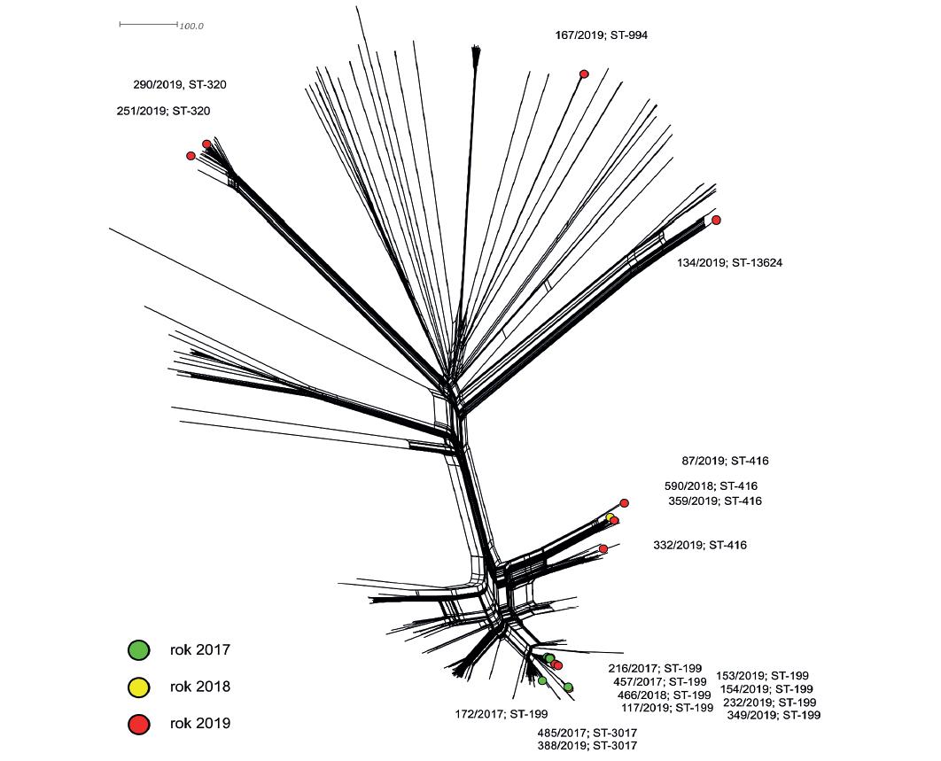 Vizualizace genetické diverzity populace S. pneumoniae sérotypu 19A z Evropy<br> Figure 2. Visualization of genetic diversity of the population of S. pneumoniae serotype 19A from Europe