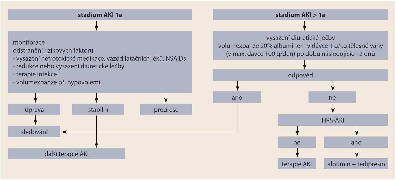 Schéma 1. Vedení léčby AKI u jaterní cirhózy [10].<br> Scheme 1. Management of AKI treatment in liver cirrhosis [10].