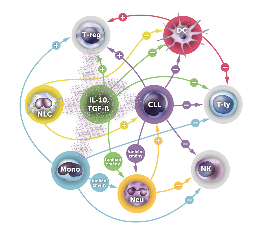 Hlavní interakce mezi CLL a buňkami imunitního systému