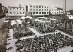 Vlastní zahradnictví se zeleninovou zahradou zásobovalo jídelnu.